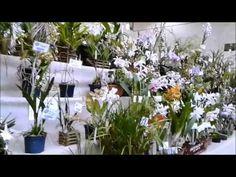 Exposição de orquídeas em Campinas - 2016