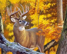 Whitetail Deer Pictures, Deer Photos, Wildlife Paintings, Wildlife Art, Deer Paintings, Deer Drawing, Deer Art, White Tail, Watercolor Animals