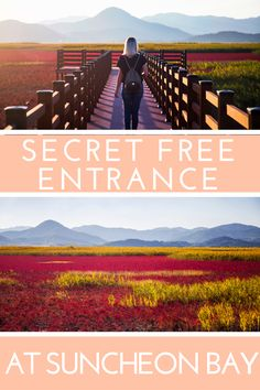 The SECRET free entrance at Suncheon Bay // SOUTH KOREA