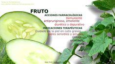 Pepino. Propiedades medicinales de la planta