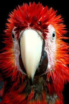 Red Head to Toe Red color of passion, strength and power!                                                                                                                                                      Mais