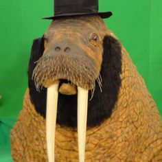 Walrus dressed like Abe Lincoln, how interesting I Am The Walrus, Lincoln, Bucket, Animals, Aquarius