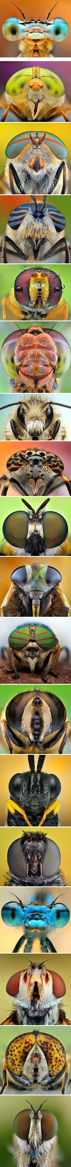 Photographer Ireneusz Irass Waledzik - A collection of fascinating facetted eyes of dragonflies, bees and flies. #Insects #Eyes