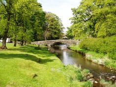 30 Cocker Spaniel, Dublin, Yorkshire, Ireland, Golf Courses, David, River, Garden, Outdoor