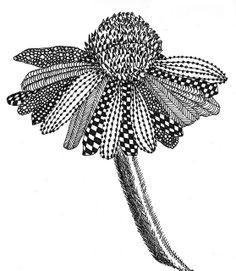 CONE FLOWER BLACK AND WHITE by Margaret Storer-Roche, via Flickr