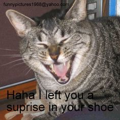 Ha-ha I left you a surprise in your shoe