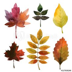 set of watercolor autumn leaves watercolor Clipart photos, royalty-free images, graphics, vectors & videos Fall Leaves Drawing, Fall Leaves Tattoo, Autum Leaves, Watercolor Leaves, Watercolor Cards, Watercolor Paintings, Watercolors, Autumn Illustration, Watercolor Illustration
