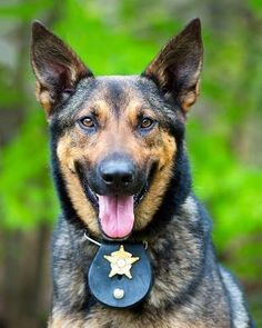 Isn't it a great idea to have the 2016 calendar, featuring the police dogs? If you are a dog lover, you will find this project valuable. Aside from that, the police officers will be the ones, who will promote and ...