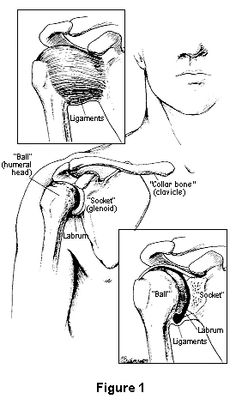 Rotator Cuff And Labrum