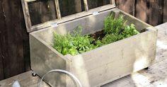 Hennot yrtit kaipaavat suojaa hallaöiltä. Katso Viherpihan ohjeet ja nikkaroi puinen yrttilaatikko helposti ja edullisesti. Hydroponic Plants, Hydroponics, Garden Compost, Gardening, Helsingborg, Raised Garden Beds, Dream Garden, Garden Projects, Garden Ideas