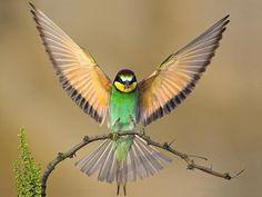 תוצאות חיפוש תמונות ב-Google עבור http://islamicsunrays.com/wp-content/uploads/2011/01/green-bird-wings-spread.jpg