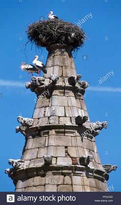 Storks, Statue Of Liberty, Birds, Travel, 16th Century, Fotografia, Statue Of Liberty Facts, Viajes, Statue Of Libery