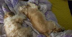 #시츄#shihtzulove#shihtzu#dog#dogs#ilovedogs#doggy#dogstagram#shihtzustagram#일상#일상스타그램🐥#일상스타그램#일상그램#강아지#코카스파니엘#오드아이#코커스파니엘#doggies#oddeye#cockerspaniel#shihtzulove#oddeyedog#반려견스타그램#shihtzus##강아지스타그램#일상사진📷#일상스타그램💕#일상사진가#selfie#愛犬#こいぬ