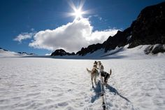 Dog sledding on a glacier, Juneau, AK. One of the most breathtaking rides of my life