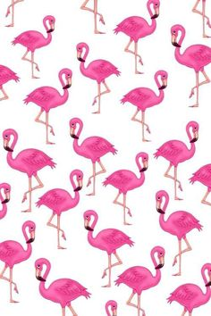 Image via We Heart It #bird #flamenco #pink #wallpaper