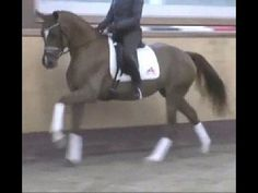 www.sporthorses-online.com 2012 Hanoverian mare by Floriscount for sale
