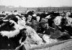 USA. Fairmount, Indiana. 1955. James DEAN spent his youth on the farm of his uncle Marcus Winslow, where he loved to mix with the animals in the barnyard, to explore and perform in the cattle pens and barns