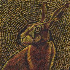 Cowper's Hare by Vikkki on deviantART