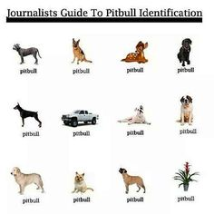 Journalists' Guide to Pitbull Identification