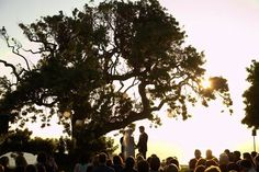 outside wedding under a tree like this! I love it!