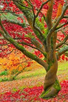 Amazing autumn tree
