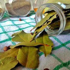 Bobkový list je pokladem kuchyně a symbolem vítězství | Jíme Jinak