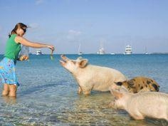 Pig Island, Bahamas (© Raymond Forbes/Getty Images)