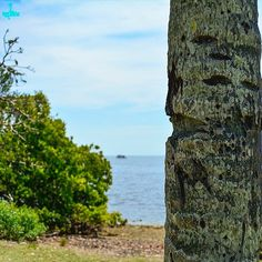 #nikonlife #miamiphotography #photographylife #Miamilife #DMStreetgeek #darqmatter http://ift.tt/219OArd