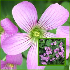 45 best flora images on pinterest flower photography flower weeds with pretty tiny flowers mightylinksfo