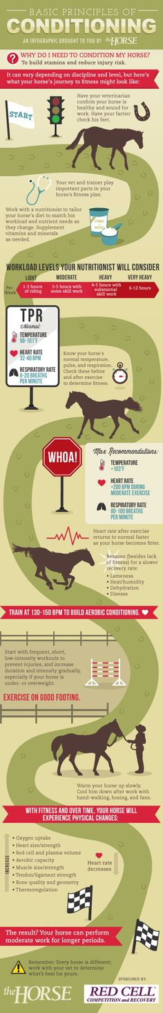 INFOGRAPHIC Basic Principles of Conditioning for Horses Learn how to safely take your horse from flabby to fit stepbystep with our visual guide Brought to you by and Ho. My Horse, Horse Love, Horse Hay, Pretty Horses, Beautiful Horses, Horse Information, Horse Exercises, Horse Care Tips, Horse Anatomy