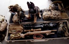 .Everything a sniper needs. That cute little fur ball, once trained, will be his guard while he's doing his job!!
