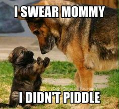 Piddler!!
