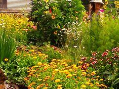 A cutting flower garden