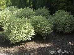 Tu ma być ogród :)
