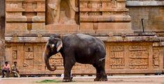 elefante india - Pesquisa do Google