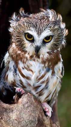 "Owl be darned!  You'll just have to excuse me... I'm having a ""bad hair day""!"
