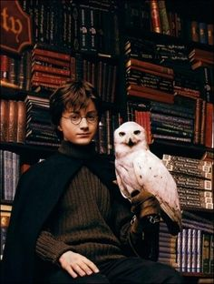 Harry Potter (Daniel Radcliffe) and Hedwig Hedwig Harry Potter, Harry James Potter, Harry Potter Tumblr, Young Harry Potter, Theme Harry Potter, Mundo Harry Potter, Harry Potter Pictures, Harry Potter Cast, Harry Potter Universal