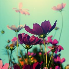 Beautiful sky backdrop against these vibrant flowers! I'd love to paint these!