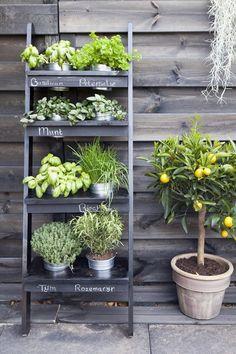 kleine Kräutergarten Design deas vertikalen Garten DIY Leiter