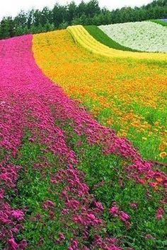 Farm Tomita Star of Japan