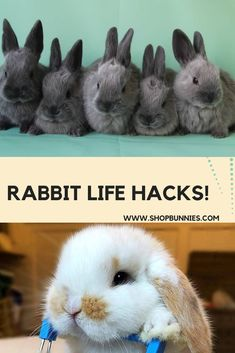 Rabbit Life Hacks ! Rabbit Facts, Rabbit Behavior, Rabbit Life, Rabbit Eating, Useful Life Hacks, Cute Funny Animals, Bunny, Dog, Pets