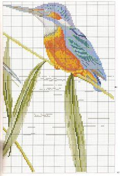 Gallery.ru / Фото #35 - Le grand livre des oiseaux - irinask