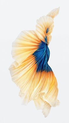 iphone 6s fish gold wallpaper ios9