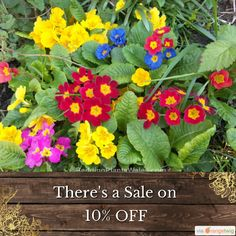 10% OFF on select products. Hurry, sale ending soon!  Check out our discounted products now: https://orangetwig.com/shops/AAB5v98/campaigns/AACeg99?cb=2016004&sn=RetroDIYandPlants&ch=pin&crid=AACeg29&utm_source=Pinterest&utm_medium=Orangetwig_Marketing&utm_campaign=SPRING_GARDEN_PLANTS