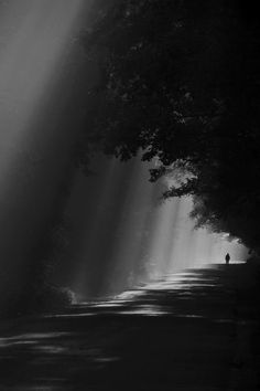 Aonde tem luz, tem sombra!! Aonde tem terra, tem árvore!!