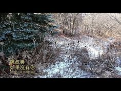 Peter Suk Sin Chan: 如果沒有你      陳叔善唱      ( 原唱白光 经典歌曲 ) My Singing, Music Videos, Outdoor, Outdoors, Outdoor Games, The Great Outdoors