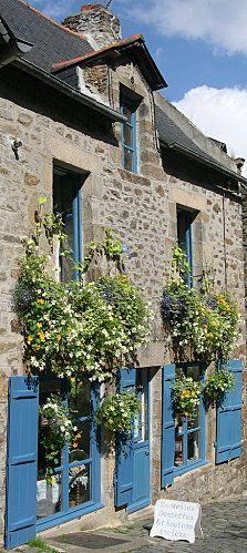 Fleur de lin et bouton d'or : Dinan, France