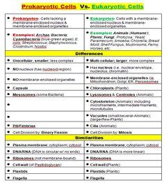 Prokaryotes VS Eukaryotes Study Biology, Biology Lessons, Ap Biology, Teaching Biology, Science Biology, Science Lessons, Science Education, Life Science, Biology Revision