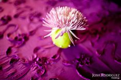 Apple with a chrysanthemum topper - Being Green and Eating Greens, part 2 | Gingerleaf Floral