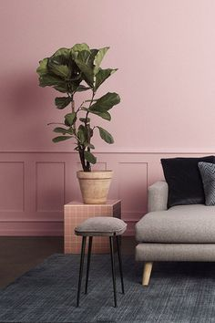 Pink Hallway, Pink Home Offices, Pink Home Accessories, Rumble In The Jungle, Pink Furniture, Botanical Decor, Pink Room, Pink Walls, Pink Wallpaper